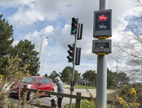 Pedestrian with dog using pelican crossing on road at Dibden Purlieu, Hampshire 2016. Creator: Unknown.
