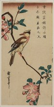 Korean Nightingale on Cherry Branch, early or mid 1830s. Creator: Ando Hiroshige (Japanese, 1797-1858).