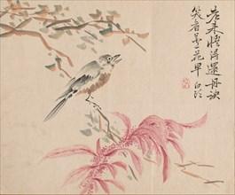 Strawberry Spinach and Nightingale. Creator: Tsubaki Chinzan (Japanese, 1801-1854).