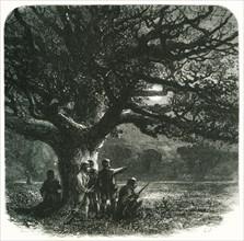 'The Watch Oak', c1870.