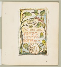 Songs of Innocence and of Experience: The Sick Rose, ca. 1825. Creator: William Blake.