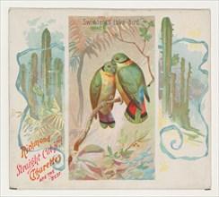 Swintern's Love-bird, from Birds of the Tropics series (N38) for Allen & Ginter Cigarettes, 1889.
