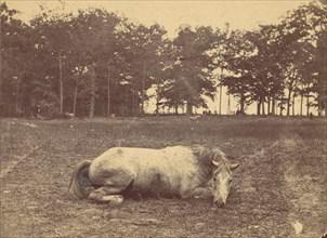 Is This Death - Antietam Battlefield, September 1862, 1862.