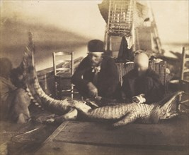 Autopsy of the First Crocodile Onboard, Upper Egypt, 1852.