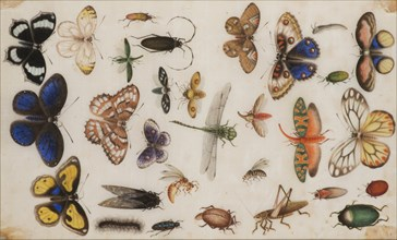 Study of butterflies and insects. Creator: Anonymous.