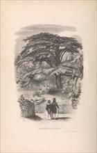 Le Jardin des Plantes, Descriptions et Moeurs des Mammiferes, 1842. Creator: Francois Boitard.