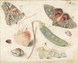 Studies of Fruits, Insects and Shells, late 16th-mid-17th century.