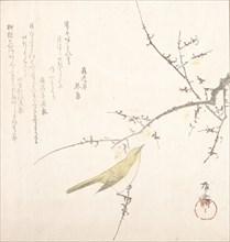 New Moon; Nightingale on a Plum Branch, 19th century., 19th century. Creator: Shinsai.