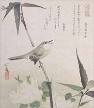 Roses and Bamboo with Nightingale, 19th century., 19th century. Creator: Hokuba.