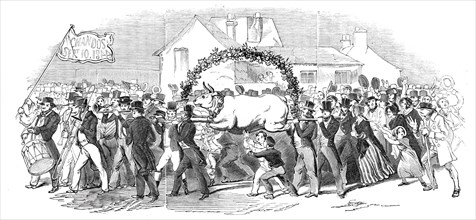 Procession of the ox