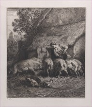 Woman Feeding Pigs
