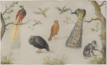 Study of Birds and Monkey, 1660/1670.