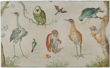 Study of Birds and Monkeys, 1660/1670.