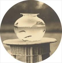 Untitled (Fishbowl), c. 1888.