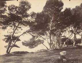 Cannes, Ile Saint Honorat, c. 1899-1927.