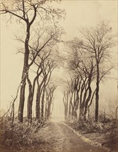Road and Trees with Hoarfrost, 1860.