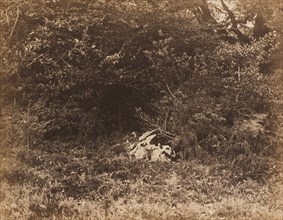 A Rock in the Forest, c. 1865.