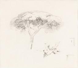 Umbrella Pine and Other Studies, 1839/1845.