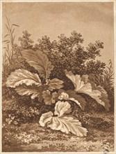 A Study of Leaves, c. 1800.