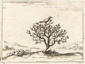 Nightingale in a Bush, 1628.
