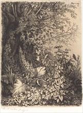 La bardane au saule (Burdock with Willow), published 1849.
