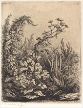 La petite berle aux liserons (Small Water-parsnip with Bindweed), published 1849.