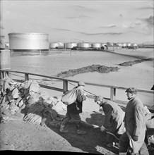 Coryton Oil Refinery, Thurrock, Essex, 02/02/1953. Creator: John Laing plc.
