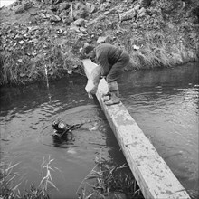 River Nar where the Fens gas pipeline crosses the river, Norfolk, 20/09/1967. Creator: John Laing plc.