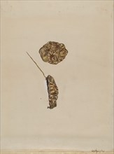 Brooch, c. 1936. Creator: Grace Halpin.