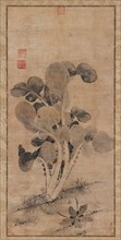 A Cabbage Plant, Late Yuan or early Ming dynasty, 14th-15th century. Creator: Unknown.