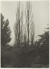 Poplars - Lake George, 1935. Creator: Alfred Stieglitz.