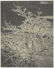"""From the Back-Window """"291"""" Snow-Covered Tree, Back-Yard, 1915. Creator: Alfred Stieglitz."""