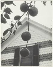 Gable and Apples, 1922. Creator: Alfred Stieglitz.