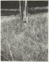 Grass and Flagpole, 1933. Creator: Alfred Stieglitz.