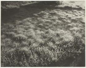 Grass and Frost, 1934. Creator: Alfred Stieglitz.