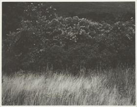 Hedge and Grasses - Lake George, 1933. Creator: Alfred Stieglitz.