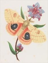 Sulfur Peacock Moth, 1862. Creator: Louis Prang.