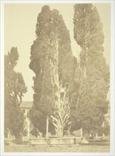 Untitled (Trees in Rome), c. 1857. Creator: Robert MacPherson.
