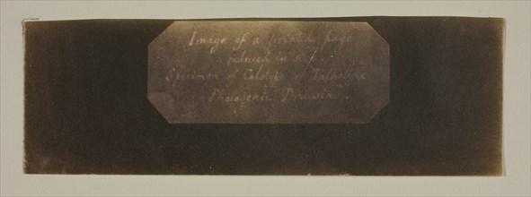 Specimen of Calotype of Talbotype, Photogenic Drawing [label], c. 1840/41. Creator: William Henry Fox Talbot.