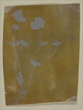 Stem of Leaves and Flowers, c. 1835/37. Creator: William Henry Fox Talbot.