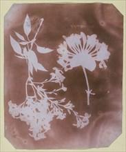 Two Plant Specimens, 1839. Creator: William Henry Fox Talbot.