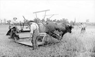 Les travaux des champs pendant la guerre en France