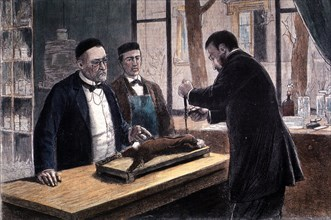 Louis Pasteur, French Chemist and Bacteriologist