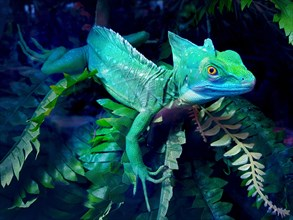 Helmet-bearing basilisk lizard sits in a terrarium among green leaves