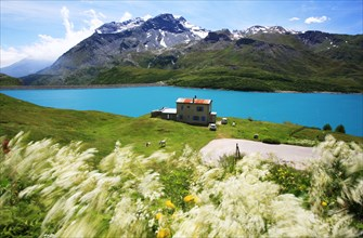 Bright blue lake and flowers in wind on Lac du Mont Cenis France