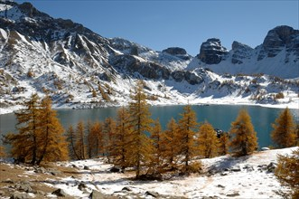 Winter View of Lake Allos or Lac d'Allos in the Mercantour National Park with Autumn European Larches, Larix decidua, Southern French Alps, France