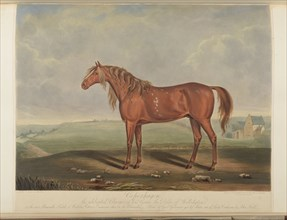 Copenhagen, Wellington's horse at Waterloo