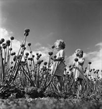 Vacances à la campagne, 1952