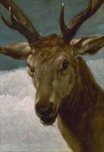 Velázquez, Stag's head