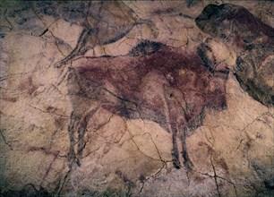 Bison, peinture rupestre